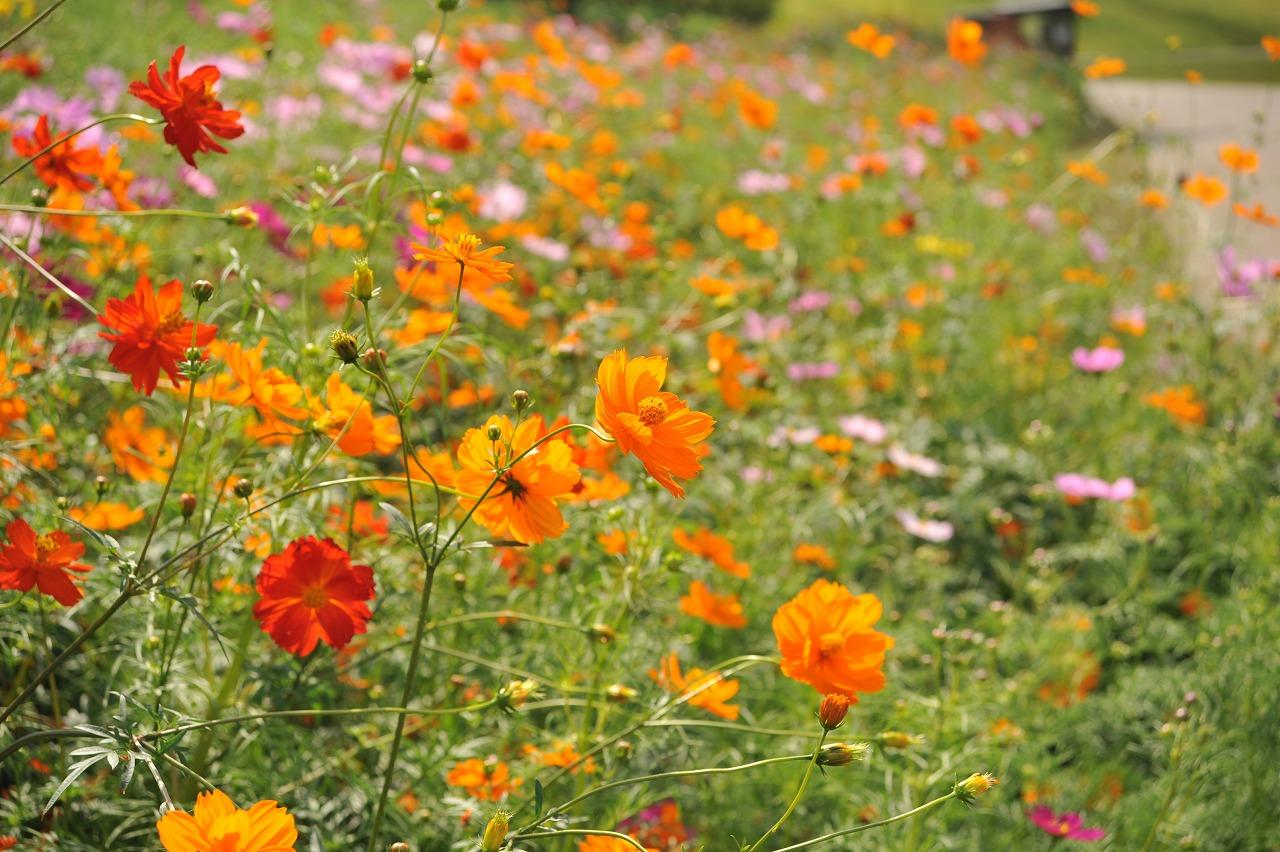 花と緑のクイズラリー