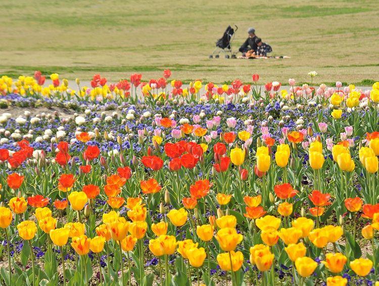 花笑フォトコンテスト♯2021春