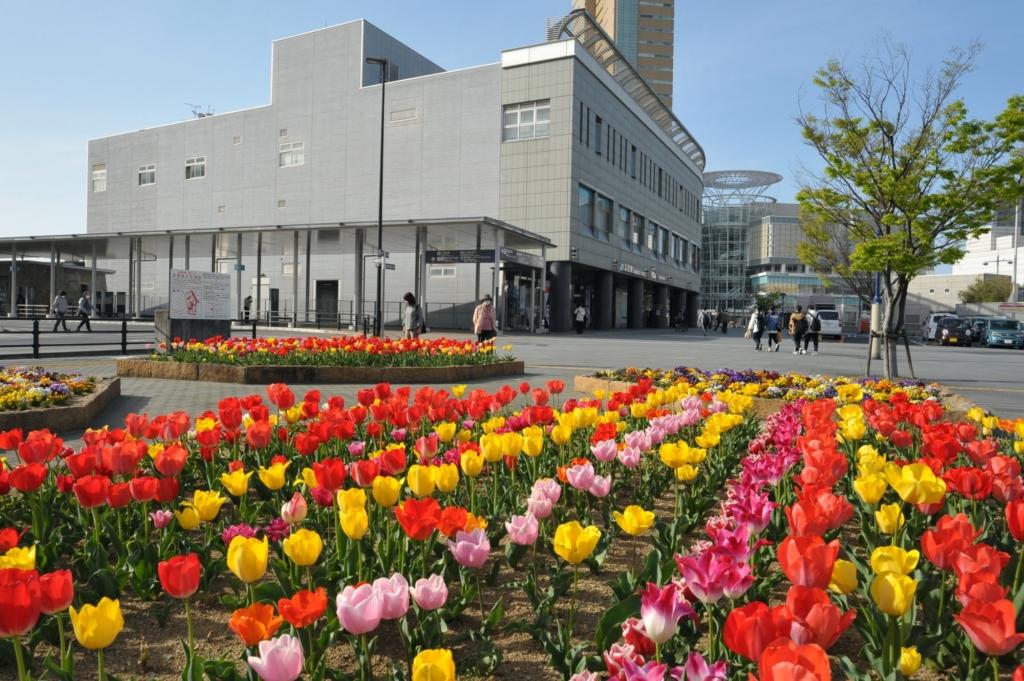 JR高松駅チューリップ開花