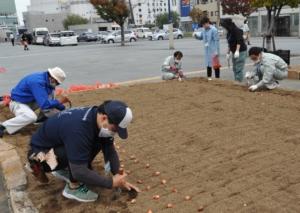 高松駅花壇でチューリップの球根を植える
