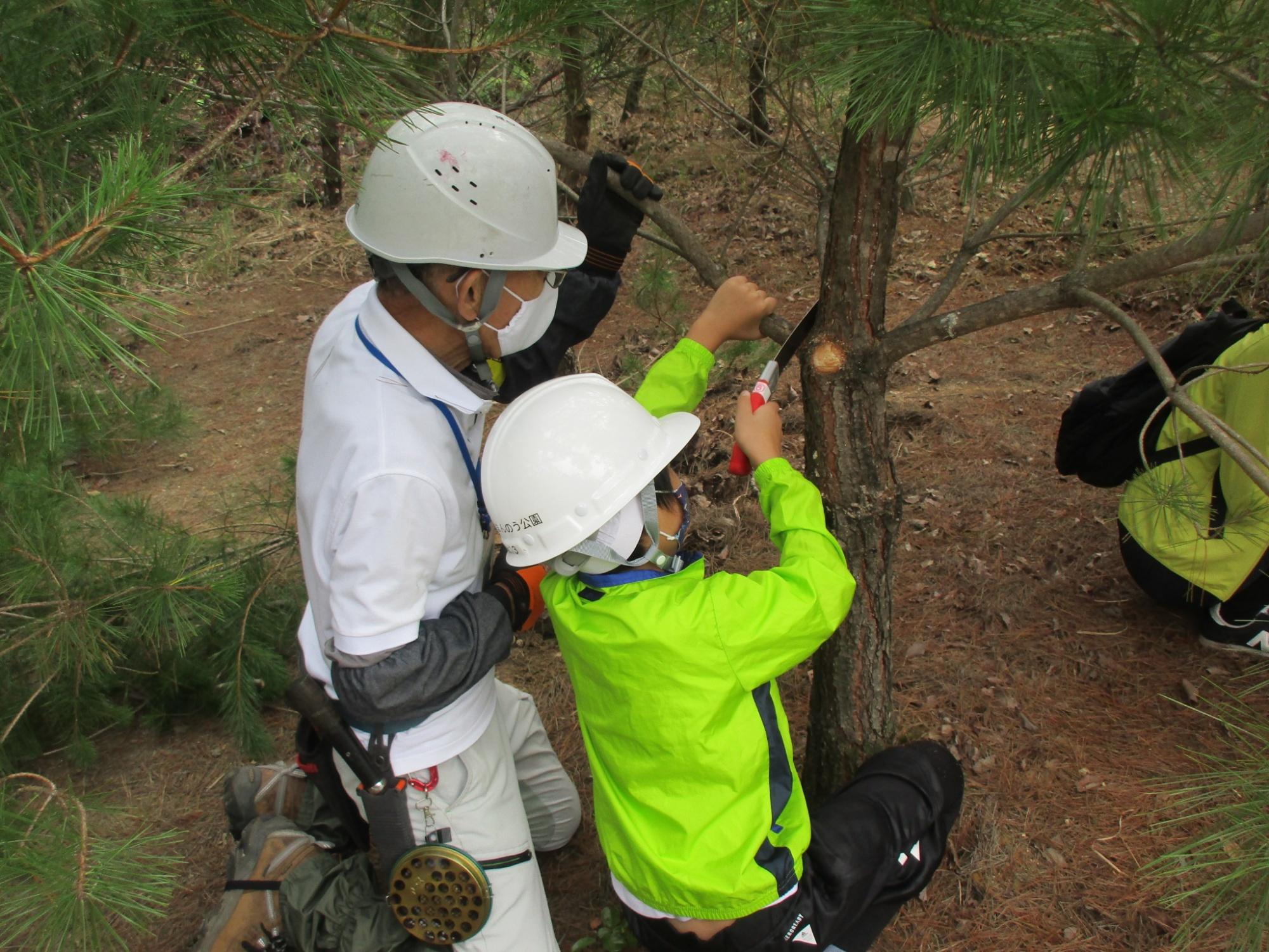 それゆけ!きこり探検隊「秋の森の観察とアカマツの枝打ち体験」